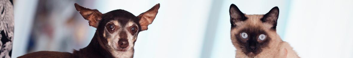 Mejora tu clínica veterinaria