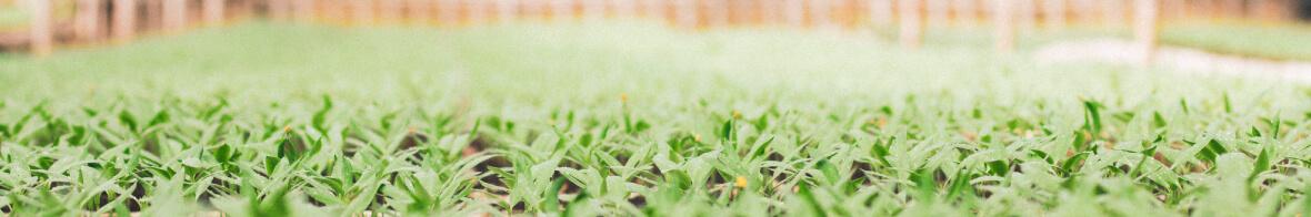 ERP La semilla del éxito en la comercialización agrícola